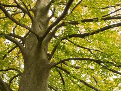 An image of a tree